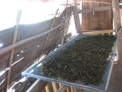 drying green tea on the 3rd floor