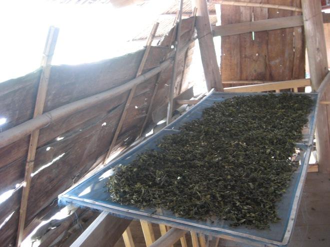 drying green tea on the 3rd floor