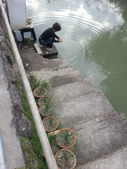 washing vegetables in the canal